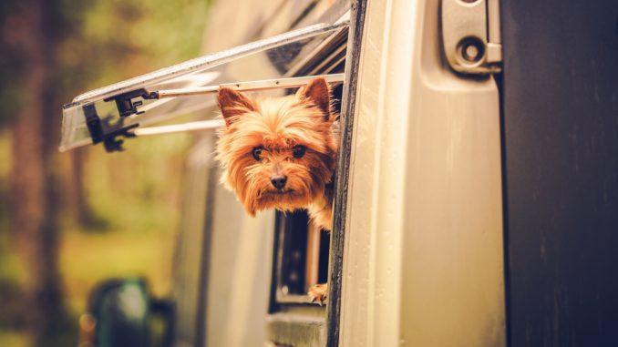 Hund in Wohnwagen